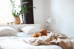 Orange cat rests on soft bed